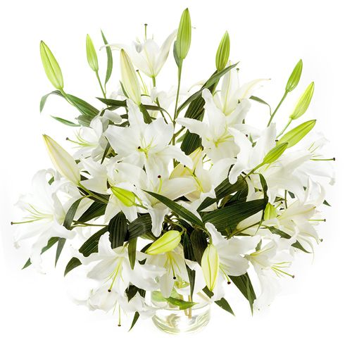 Oriental Lilies boast large, fragrant blooms which last for a VERY long time! The Oriental Lily Bouquet by Grower's Box is a great way to 'say it with flowers'. Consisting of 10 stems of Oriental Lilies, each with multiple blooms per stem, this bouquet is absolutely beautiful and makes a wonderful gift for any occasion. Visit www.growersbox.com for more information.Wholesaling Flower, Oriental Lilies, Calla Lilies, Lilies Bouquets, Lilies Boasting, Products