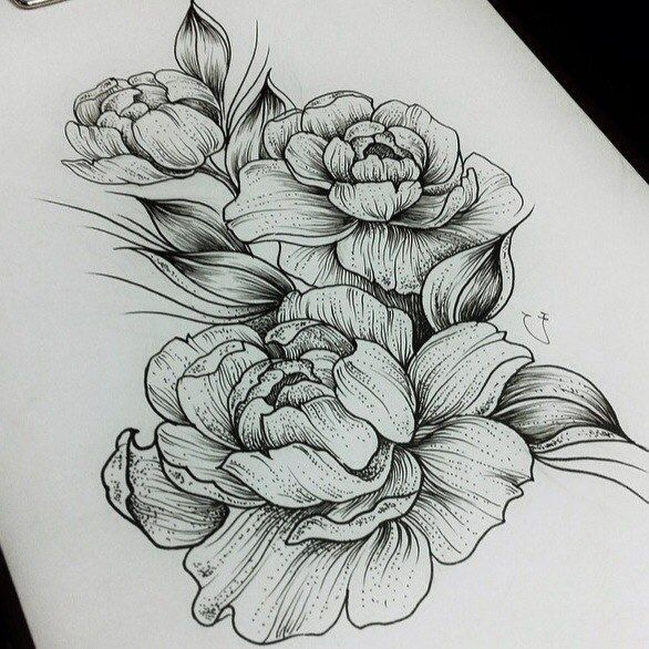 Peony Line Drawing Tattoo : Best ideas about peony drawing on pinterest peonies