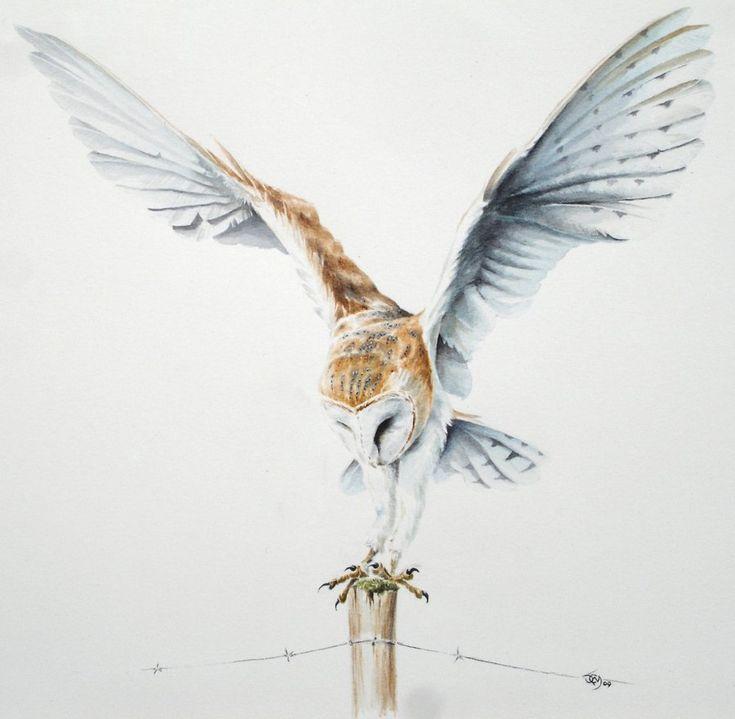 Owl Drawings | Barn Owl Landing by ~Atriedes on deviantART