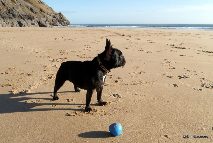 gower dogs - Google Search
