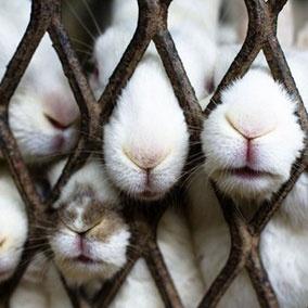 bunny noses: Kiss, Kitty Cat, Natural Photography, Funny Bunnies, Pet Memories, Easter Bunnies, Carrots, Bunnies Nose, Animal