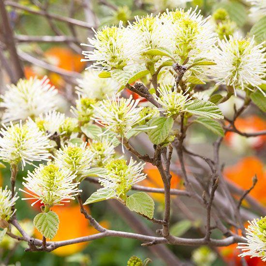 3658 best gorgeous garden plants images on pinterest for No maintenance flowering shrubs