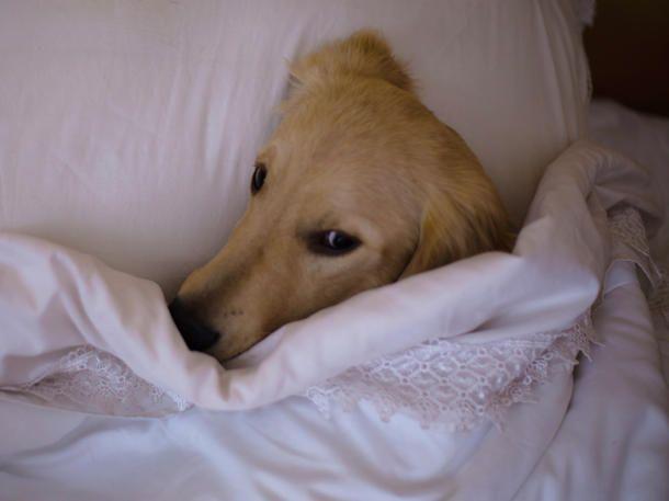 5 gute Gründe, warumn dein Hund im Bett schlafen sollte