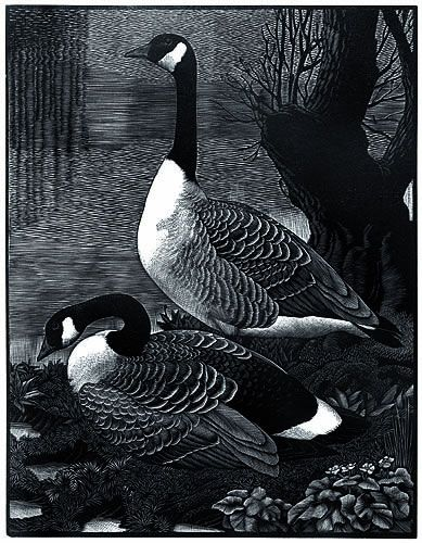Canadas in Cheshire by Charles F. Tunnicliffe