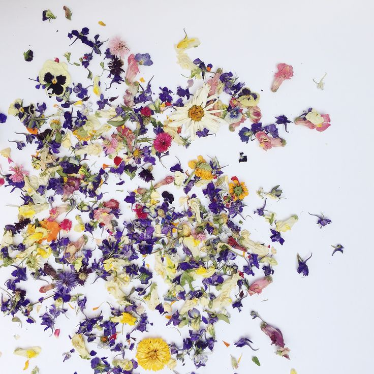 Beautiful Dried Wildflowers Awesome Design