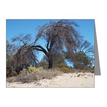 Familiar Tree Note Cards