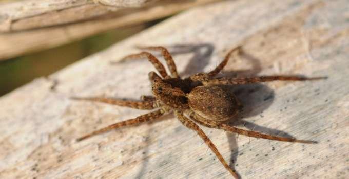 les 25 meilleures id es de la cat gorie tuer les araign es sur pinterest r pulsif anti. Black Bedroom Furniture Sets. Home Design Ideas