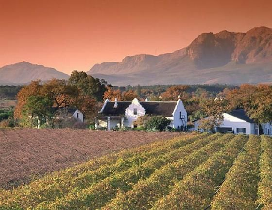 Wine farm, Stellenbosch, South Africa