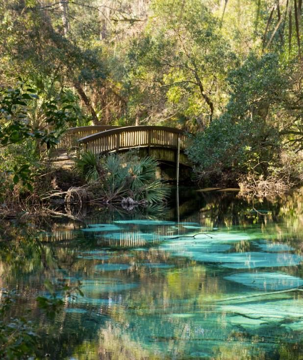 Juniper Springs Recreation Area, Florida, FL - It's a short hike through a lush forest to this secret, bubbling limestone spring.  The perfect place to spend a Sunday...