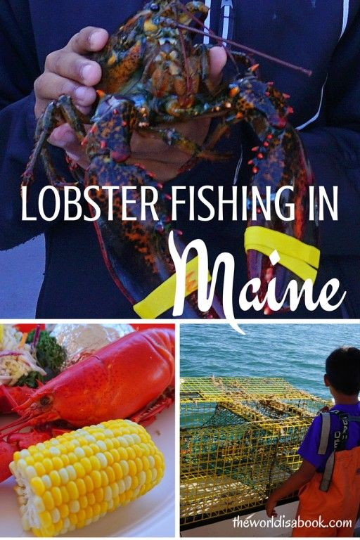 Lobster Fishing Adventures in Maine, USA with kids   Lobstering with kids
