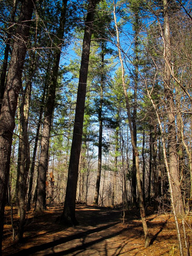 Beautiful Kains Woods on the Thames Valley Trail in London, Ontario. #woods #hiking #thamesvalleytrail