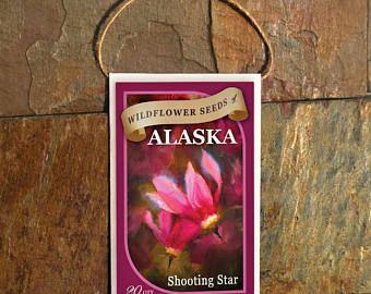 stella cadente-matrimonio seme pacchetti-fiore semi-semi di semi di pacchetti-wild pacchetti-seme Bomboniere Matrimonio Bomboniere-alaska fiori selvatici-Primula