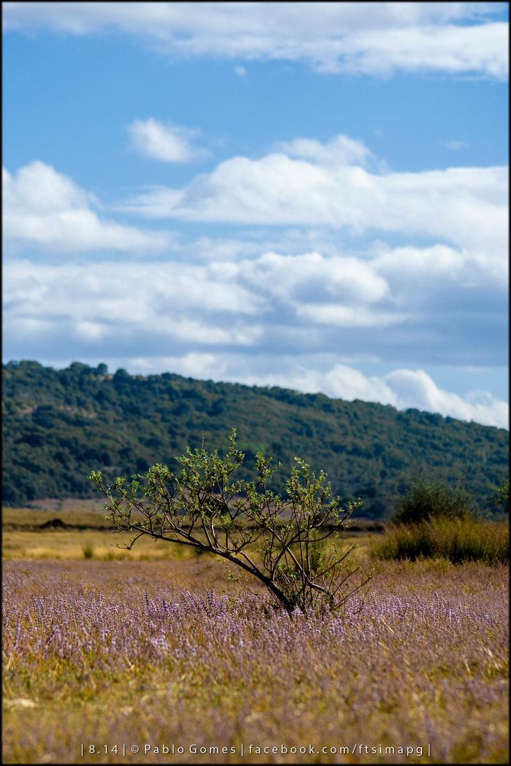Azibo [2014 - Macedo de Cavaleiros - Portugal] #natureza #naturaleza #nature #fotografia #photography #foto #photo #europa #europe #paisajem #paisajens #paisaje #paisajes #landscape #landscapes #arvore #arvores #árbol #arboles #tree #trees @Visit Portugal @ePortugal
