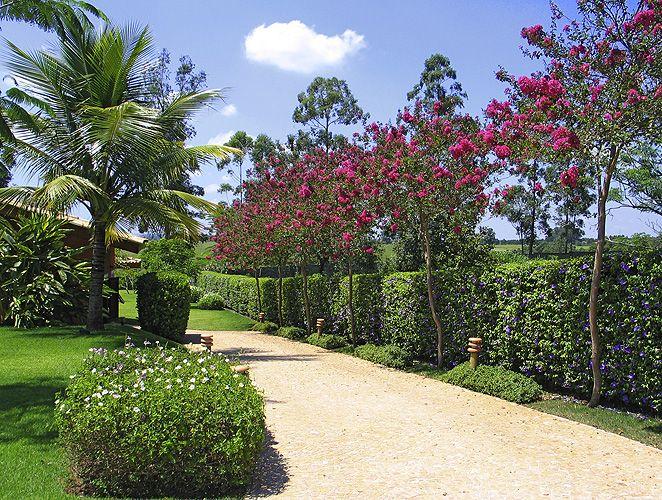 À direita, cerca viva em tumbérgia-arbustiva, que floresce o ano todo e delimita bem áreas do terreno. Por suas flores, a planta atrai colibris e mamangavas. Projeto de Marcelo Bellotto para uma casa de campo