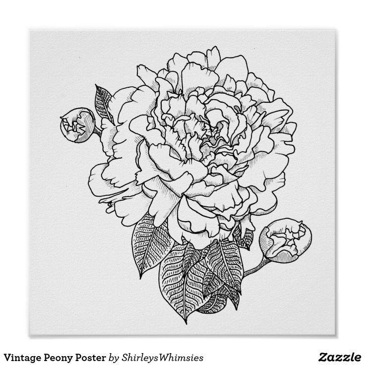 Vintage Peony Póster