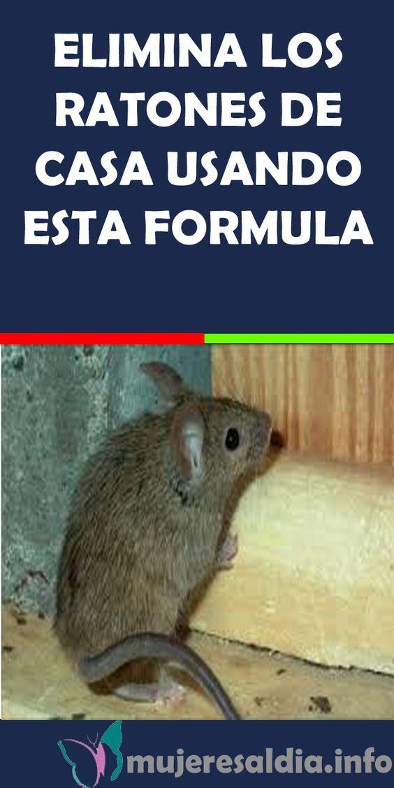 Elimina los ratones de casa usando esta formula natural - Como matar ratones ...