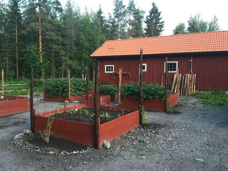 Odlingslådor byggs sommaren 2015.