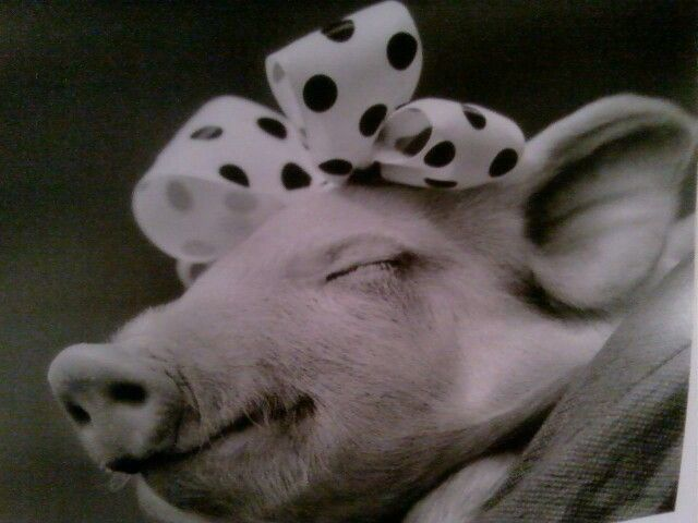 84 Best Piggy Banks Images On Pinterest Piggy Banks Pigs And Illusions