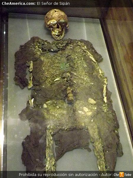 Foto del Señor de Sipán - Quién era?Foto de los verdaderos restos óseos de Sipán. En la foto real de Sipán observamos su huesos y restos textiles como así también fragmentos de oro y cobre que ya son parte de su esqueleto. En el rostro se colocaron las piezas originalmente halladas en el cuerpo, piezas de oro que cubren ojos, nariz y boca. Quien era el Señor de Sipán? Sus restos nos dicen que era una persona alta para su época, de 1.70 aprox.