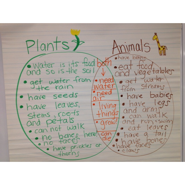 Comparing living things: Plants and Animals Venn Diagram http://greenbeankindergarten.wordpress.com