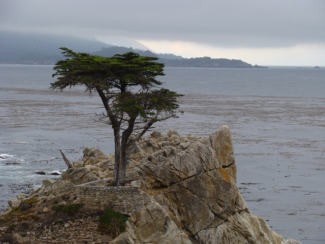 The Lonely Cypress, Monterey, CA