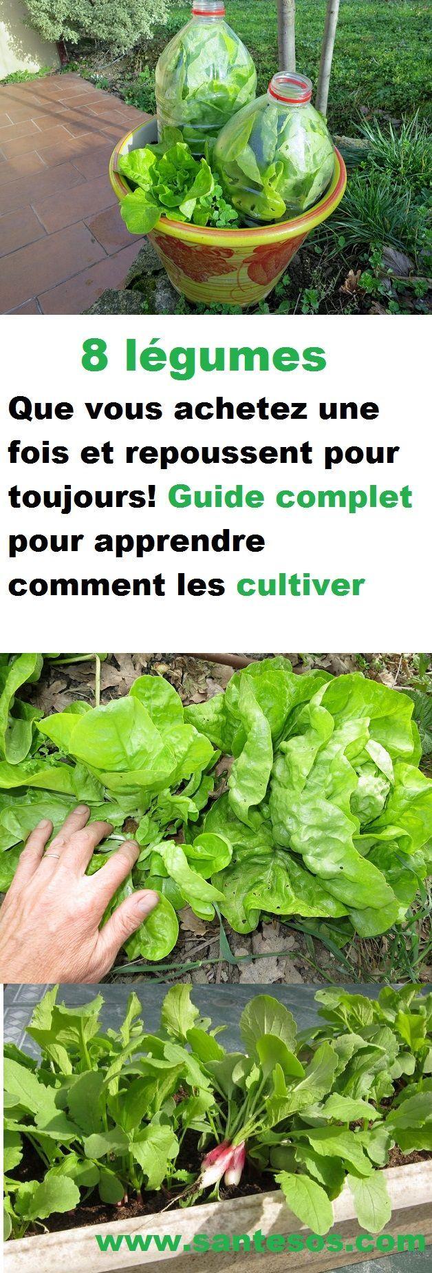 eight légumes que vous achetez une fois et repoussent pour toujours! Information complet …