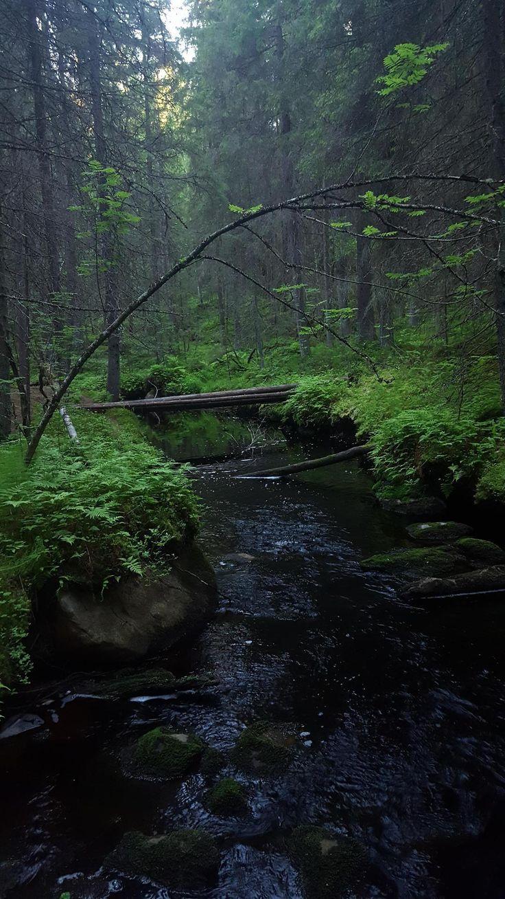 Beautiful forest, Finland, Kauhajoki, Katikankanjoni [OC] [5312x2988]
