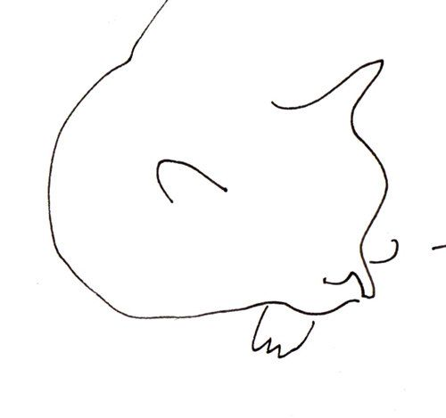 Cat Nap Ink Drawing by jamieshelman on Etsy
