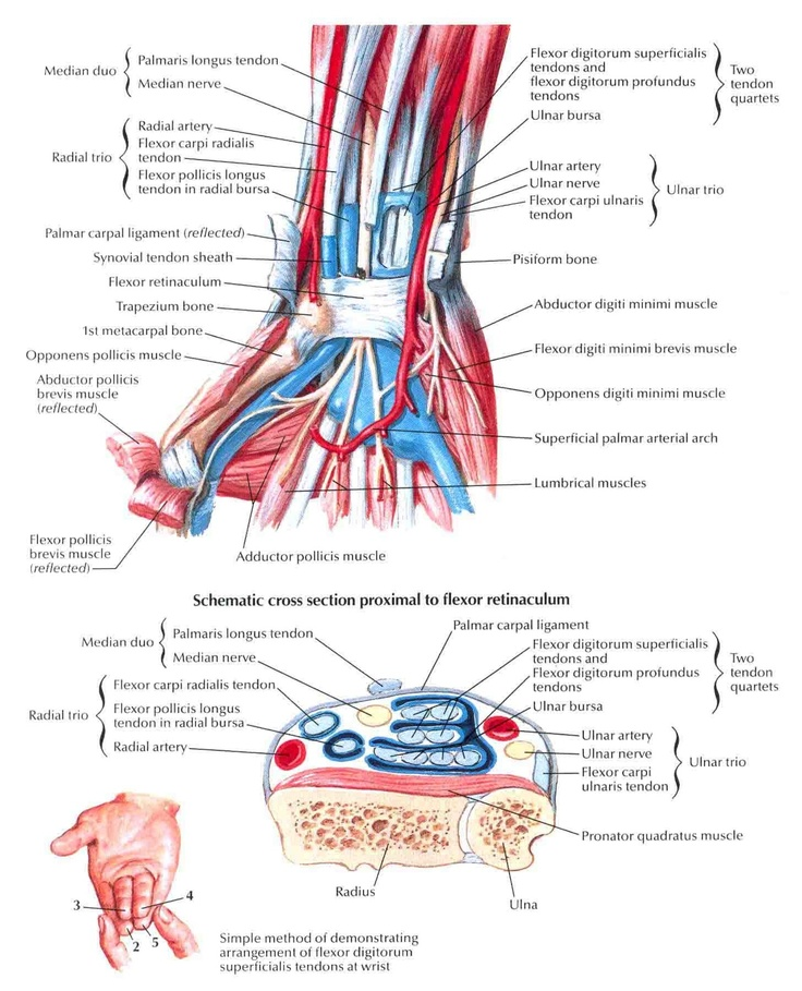 62 best injuries images on Pinterest | Health, Physical therapy and ...