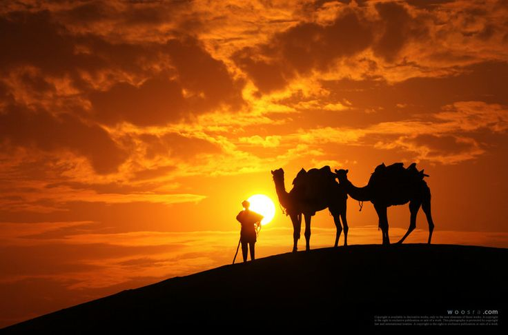 Sun, boy, and camel... by Woosra Kim on 500px