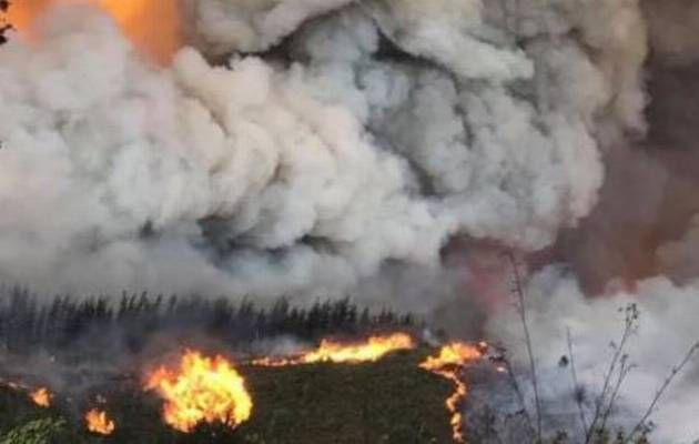 Are Knysna fires the result of arson? - Times LIVE