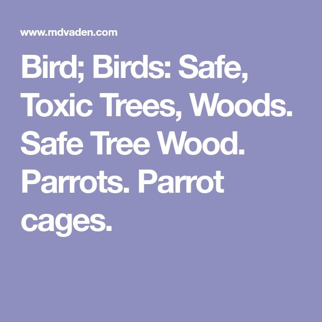Bird; Birds: Safe, Toxic Trees, Woods. Safe Tree Wood. Parrots. Parrot cages.