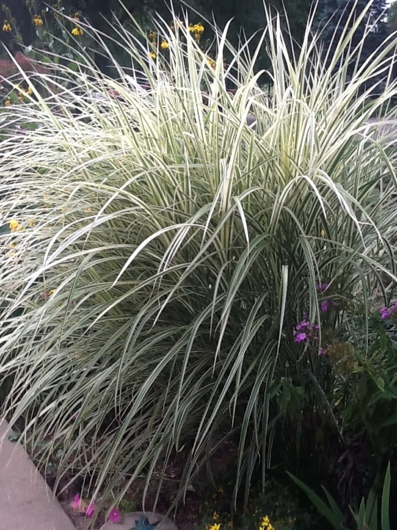 62 best gardening low maintenance white garden images on for Low growing ornamental grasses for sun