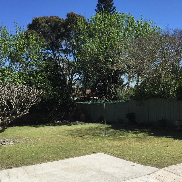 Who would have thought in Sydney you could get this beautiful backyard... another sneak peek of this property coming soon! #sydneyproperty #botanylife #homesforsale #botanybay #soldprice #sydneyrealestate #sydneyproperty #backyard #hillshoist #sydneyliving