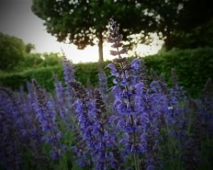 7 Herbs for Heart Health