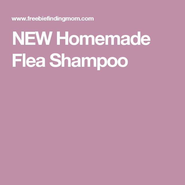 NEW Homemade Flea Shampoo