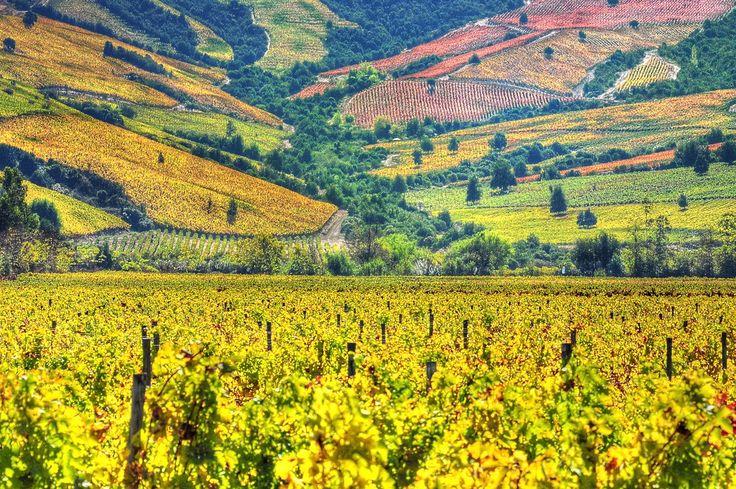 CHILE | Viñedos y Bodegas - La Tradición del Vino Chileno ...