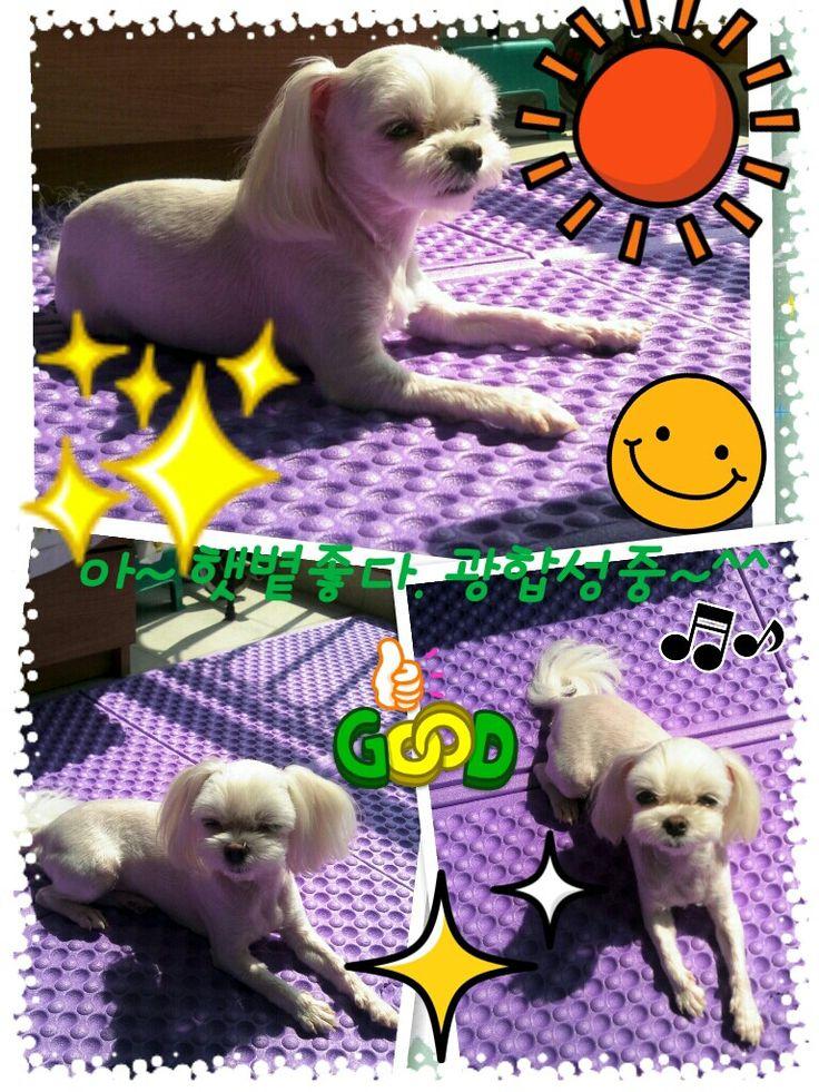 sun~♥