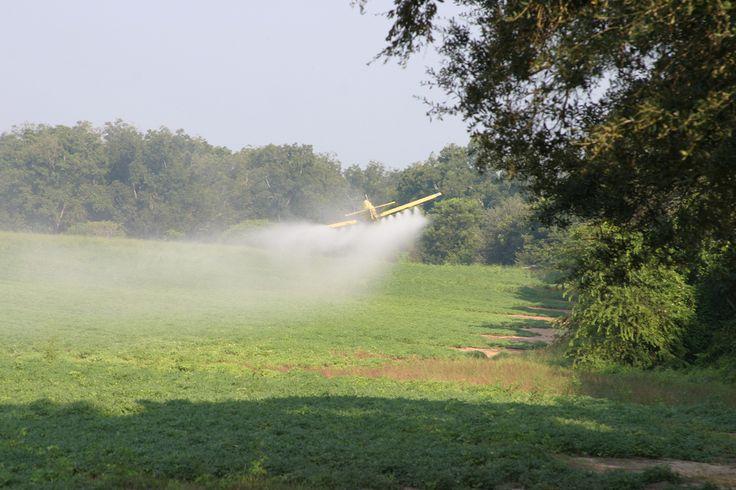 Transgênicos e agrotóxicos: uma combinação letal  Avião despejando pesticidas em plantação (Foto: Jay Oliver/UGA CAES)