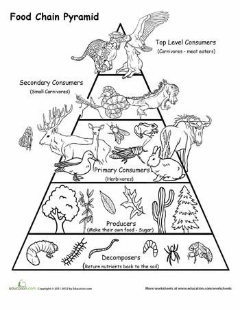 Week 3: Worksheets: Food Chain Pyramid