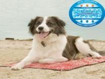 Koeldeken Rood 90  Description: Kerbl Koeldeken Rood 90Geef uw huisdier tijdens warmte extra verkoeling door ze op een koelmat te leggen. Deze koelmat is ideaal voor op de camping in de woonkamer auto of op het strand. De koelmat geeft uw hond kat konijn of ander huisdier verkoeling op een veilige en verantwoorde manier. Deze verkoelingsmat maakt uw hond 8 tot 12 graden koeler.Koeldeken voor hondenDeze koelmat is te gebruiken zonder een vriezer. U dompelt de koeldeken onder water en wacht…