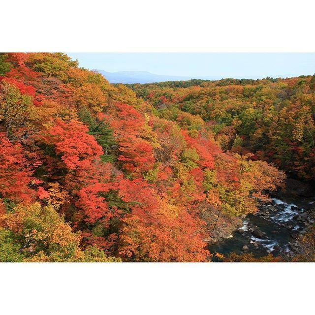 【tuybushikw_】さんのInstagramをピンしています。 《岩手山の東側裾野に広がる焼走り溶岩流から、八幡平樹海ラインの登り始めを結ぶ 〈岩手山パノラマライン〉 の樹海ライン側合流地点、松川渓谷下流。  真っ赤になった紅葉が眩しかった。  #鮮やか  #紅葉シーズン #赤 #橙 #黄  #渓谷 #橋の上から  #風景 #自然美 #森林 #秋 #紅葉 #10月  #canonphotography  #eoskissx5  #japan_daytime_view  #lovers_nippon #team_jp_  #naturelovers #2016autumn  #ファインダー越しの私の世界  #行くぜ東北  #行ってきたぜ東北  #岩手県 #八幡平市 #松川渓谷  #日本の風景  写真は #2016年最後の東北ツーリング  #2日目 より。 (撮影:'16/10/22 Sat)》