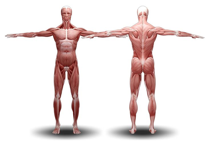 Image of potential decreased muscle strength in the human body