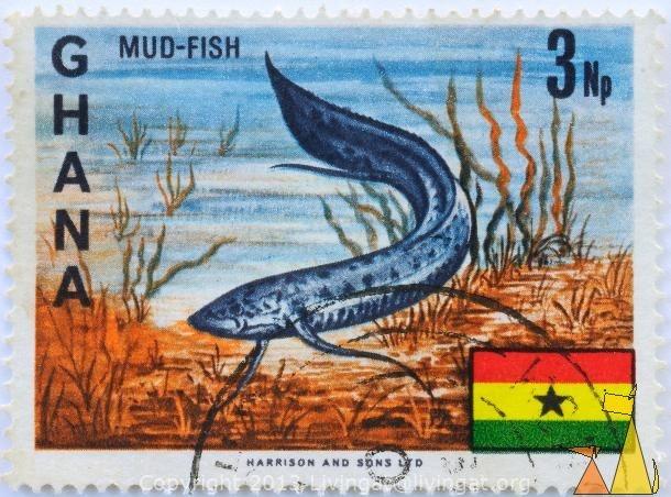 Mud-Fish. Ghana  http://stamps.livingat.org/Search.aspx?nav=Search=country=/Ghana=Africa%2fGhana%2fDSC_6413.jpg