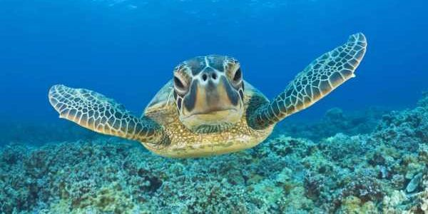 40 tartarughe marine spiaggiate in Sudafrica: avevano ingerito plastica (video)