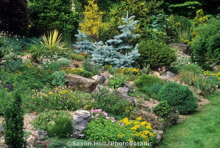 Colorful rock gardenGardens Ideas, Photography Gardens, Rocks Gardens, Connecticut Rocks, Gardens Libraries, Dwarfs Conifer Gardens, Backyards Ideas, Outdoor Spaces, Hardy Succulents