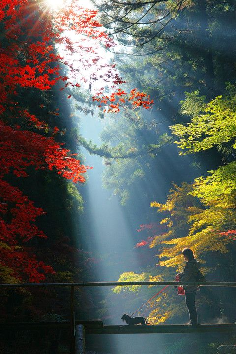 Shizuoka, Japan                                                                                                                                                                                 もっと見る