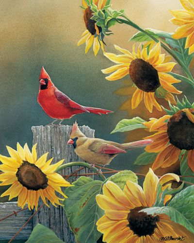 A pair of cardinals perch on a wooden fence right next to a bunch of sunflowers in Susan Bourdet's wrapped canvas Sunny Side Up Cardinal.                                                                                                                                                                                 More