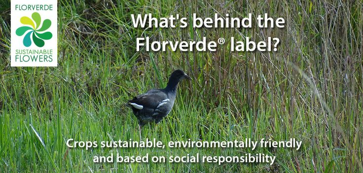 What´s behind the #Florverde label?  Crops sustainable, environmentally friendly and based on social responsibility