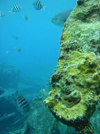 Montego Bay, Jamaica - Snorkeling was amazing!  ...and beautiful!   photo taken by (SandyO9, Mar 2010), tripadvisor.com